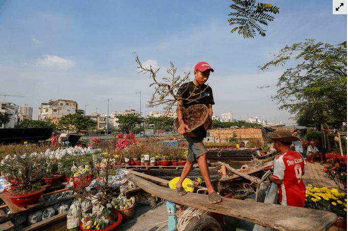 Chủ buôn vận chuyển cây lên trên vỉa hè để bán
