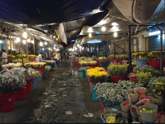Rất nhiều loài hoa đua nhau khoe sắc dưới ánh đèn lung linh