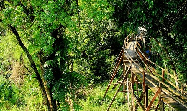 Con đường xuyên rừng Nam Cát Tiên