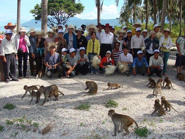 Có khoảng 1.200 con khỉ trên đảo (Ảnh ST)