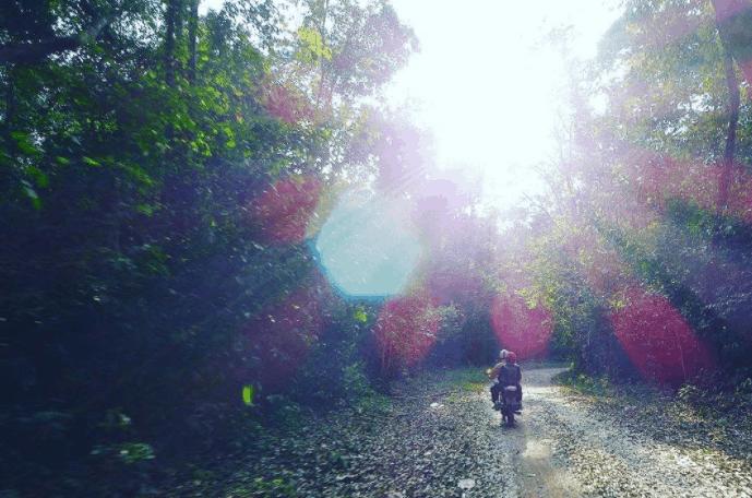 Con đường dẫn tới thác Mai được bao phủ bởi nhiều cây xanh