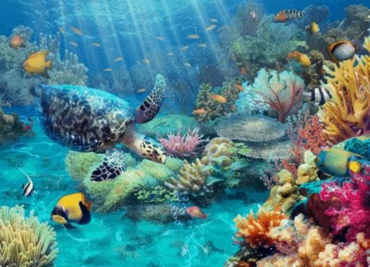 Hệ sinh thái biển Côn Đảo đa dạng với nhiều loài khác nhau