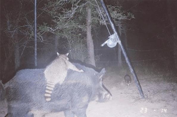 Hình ảnh cuộc sống về đêm của động vật