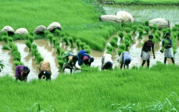 Khí hậu cận xích đạo thuận lợi cho sự phát triển của cây lúa nước