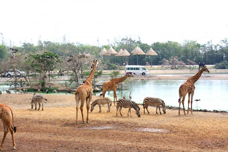 Safari World nổi tiếng ở ngay gần thành phố Bangkok