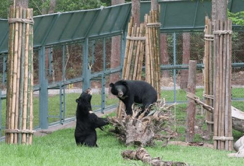 Tham quan trạm cứu hộ gấu