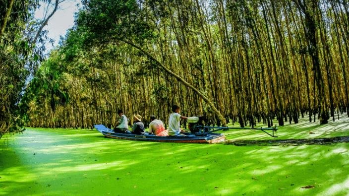 Khám phá vẻ đẹp của rừng Tràm Sư