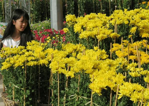 vườn hoa tết miền tây