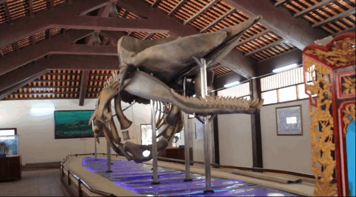 Bộ xương cá voi to thứ 2 Đông Nam Á