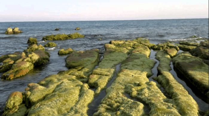 Rêu xanh phủ kín đá