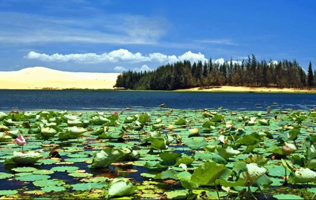 Bàu Sen - Bàu Trắng - 2 hồ nước thiên nhiên nằm giữa đồi cát trắng