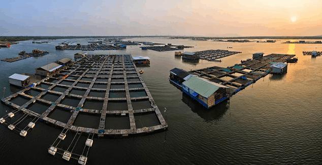 Bè nuôi trồng thủy sản tại đảo Long Sơn