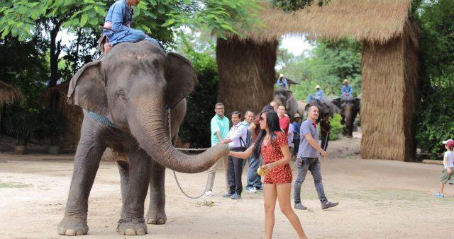 Những chú voi thân thiện trong làng (Ảnh ST)