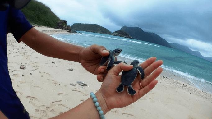 Khám phá cuộc sống của loài rùa biển tại Côn Đảo