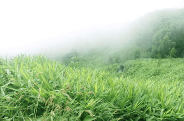 Khung cảnh mờ ảo trên núi Chứa Chan