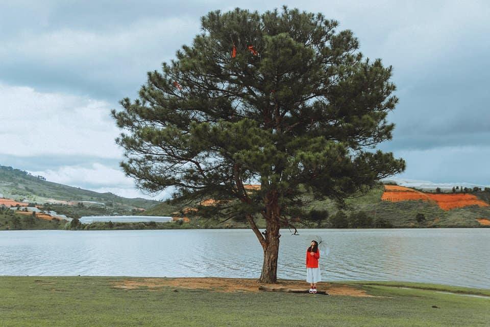 Khung cảnh bình yên thơ mộng tại cây thông cô đơn. Ảnh: ST