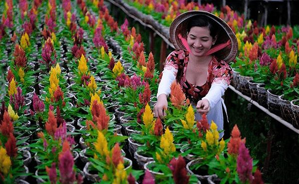 Niềm vui của người dân tại làng hoa Sa Đéc
