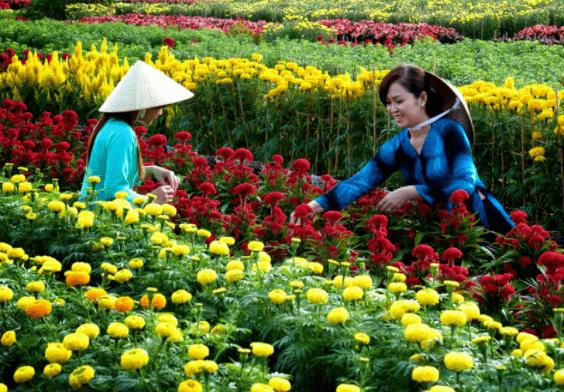 Làng hoa Sa Đéc Đồng Tháp - Địa điểm chụp ảnh tết lý tưởng