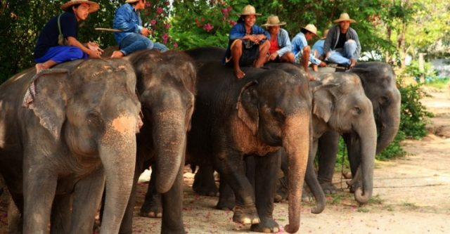 Pattaya Elephant Village - Làng voi Pattaya (Ảnh ST)