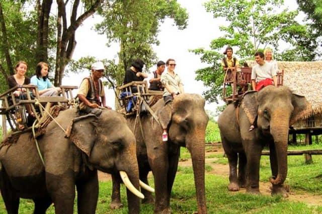 Những trải nghiệm thú vị khi tới làng voi (Ảnh ST)