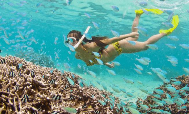 Ngắm nhìn san hô đầy màu sắc tại Hòn Thơm - Phú Quốc