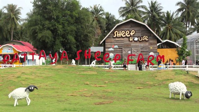 Nông trại cừu siêu cute ở Pattaya (Ảnh ST)