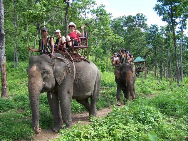 Đến thăm vườn quốc gia trong chuyến du lịch Tây Nguyên sẽ là những trải nghiệm thú vị cho bạn (Ảnh ST)