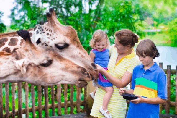 Vinpearl Safari là điểm đến hấp dẫn để gia đình vui vẻ bên nhau