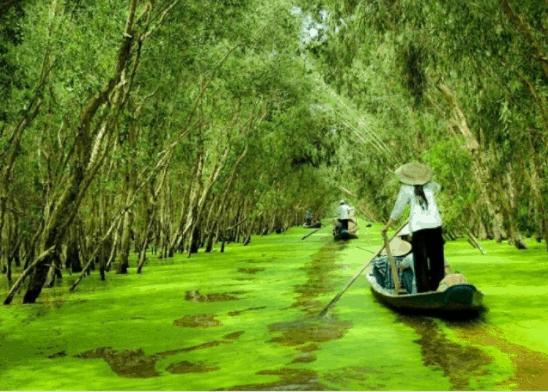 Lênh đênh sông nước để vào được rừng tràm