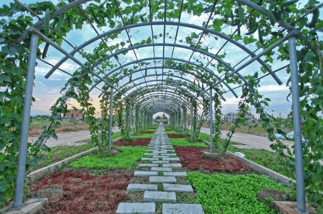 Khu vườn rau sạch