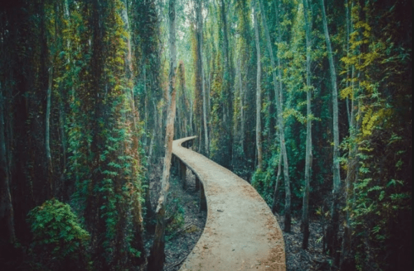 Con đường xi măng dài 5km chạy quanh rừng tràm