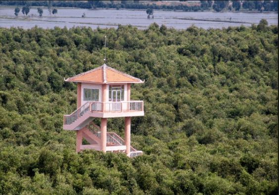 Ngọn tháp canh giữa rừng tràm