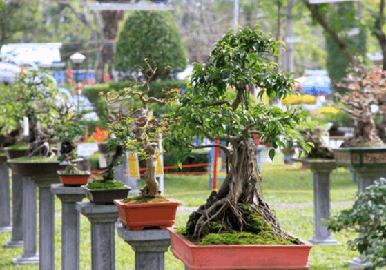Vườn cây kiểng Thanh Tâm