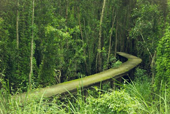 COn đường duy nhất để đi bộ khám phá rừng tràm