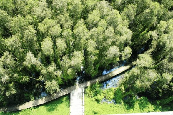Con đường xi măng dài 5km nằm uốn lượn quanh rừng tràm