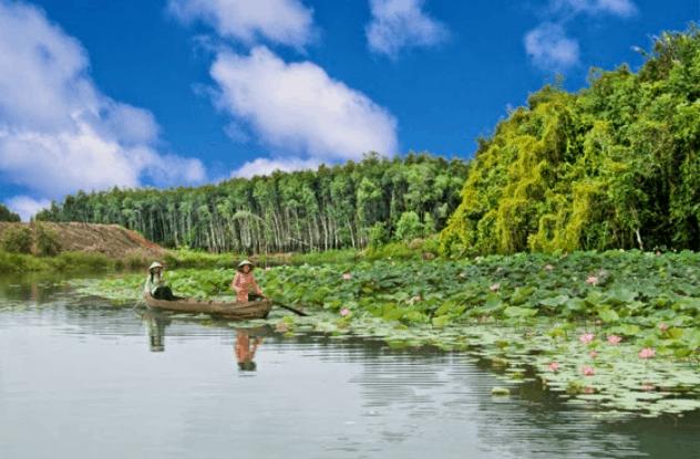 Hồ sen thơm ngát