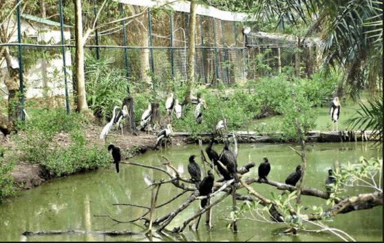 Hệ sinh thái đa dạng ở vườn chim Bạc Liêu