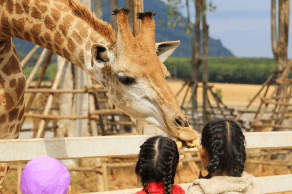 Các bé sẽ có những trải nghiệm thú vị tại vườn thú Vinpearl Safari
