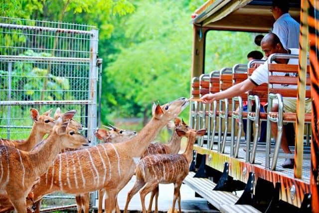 Sở thú Chiang Mai (Ảnh ST)
