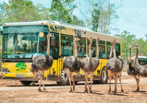 Trải nghiệm chuyến đi thú vị tới vườn thú Vinpearl Safari