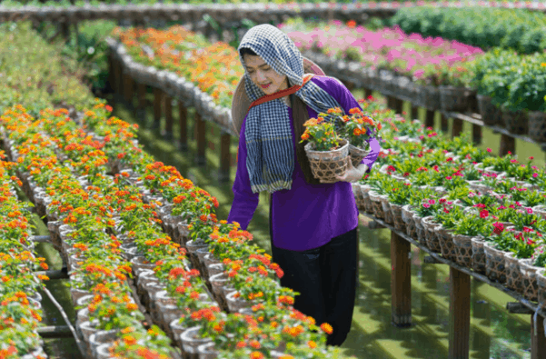 Chiêm ngưỡng vẻ đẹp của các loài hoa tại làng Sa Đéc