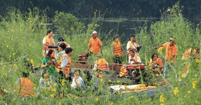 Chụp ảnh hoa nhút vàng tại hồ Búng