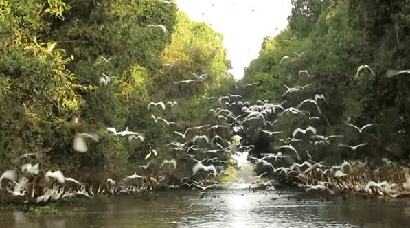 Khám phá vườn quốc gia Tràm Chim