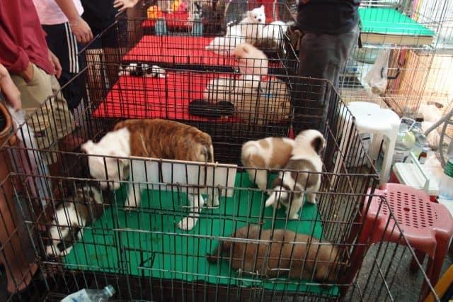 Những chú cún xinh xắn cũng được bán rất nhiều trong chợ (Ảnh ST)