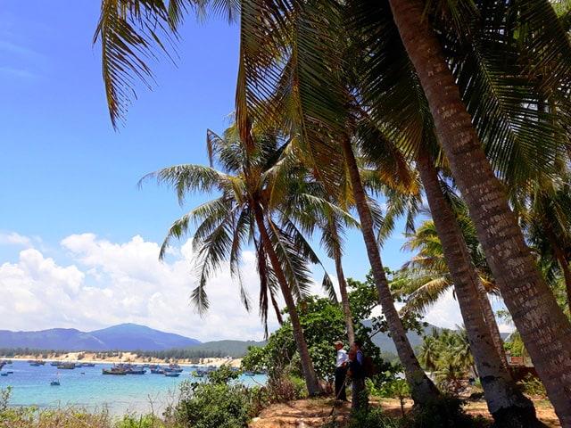 Hàng dừa xanh mát nối tiếp nhau (Ảnh ST)