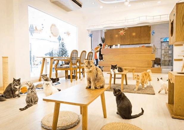 Không gian quán cùng những boss mèo vô cùng dễ thương
