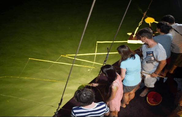 Rất nhiều du khách tham gia hoạt động câu mực đêm