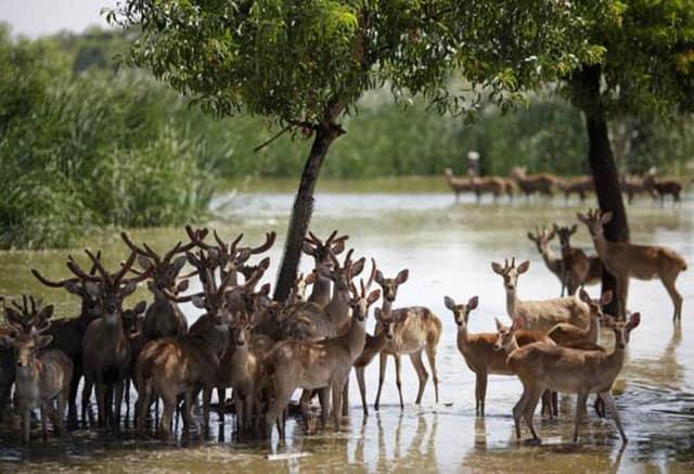Nếu có trẻ em thì nên tới công viên Safari World Bangkok nhé (ẢNH ST)