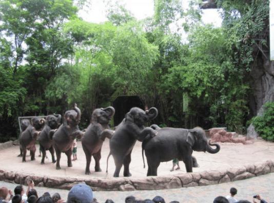 Show diễn động vật tại vườn thú Vinpearl Safari
