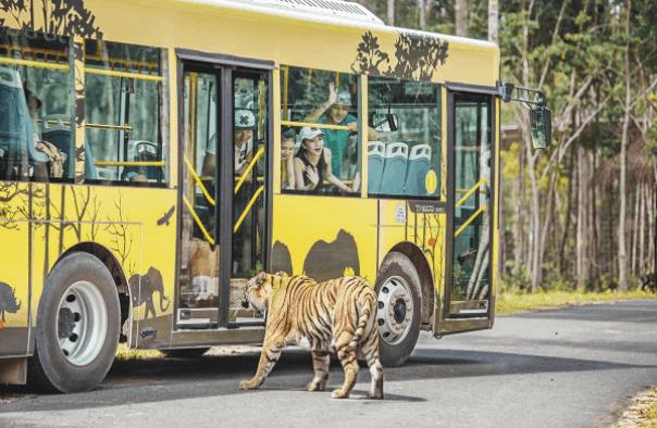 Tham quan khu vực safari hoang dã